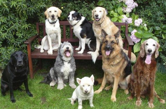 Psi razumiju ljudski jezik i pohvalu doživljavaju kao nagradu